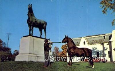 The Morgan Horse - Weybridge, Vermont VT Postcard