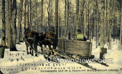 Gathering Sap - Maple Sugar Grove, Vermont VT Postcard