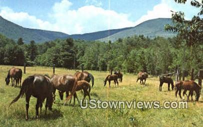 Morgan's at Bald Mountain Farm - Arlington, Vermont VT Postcard