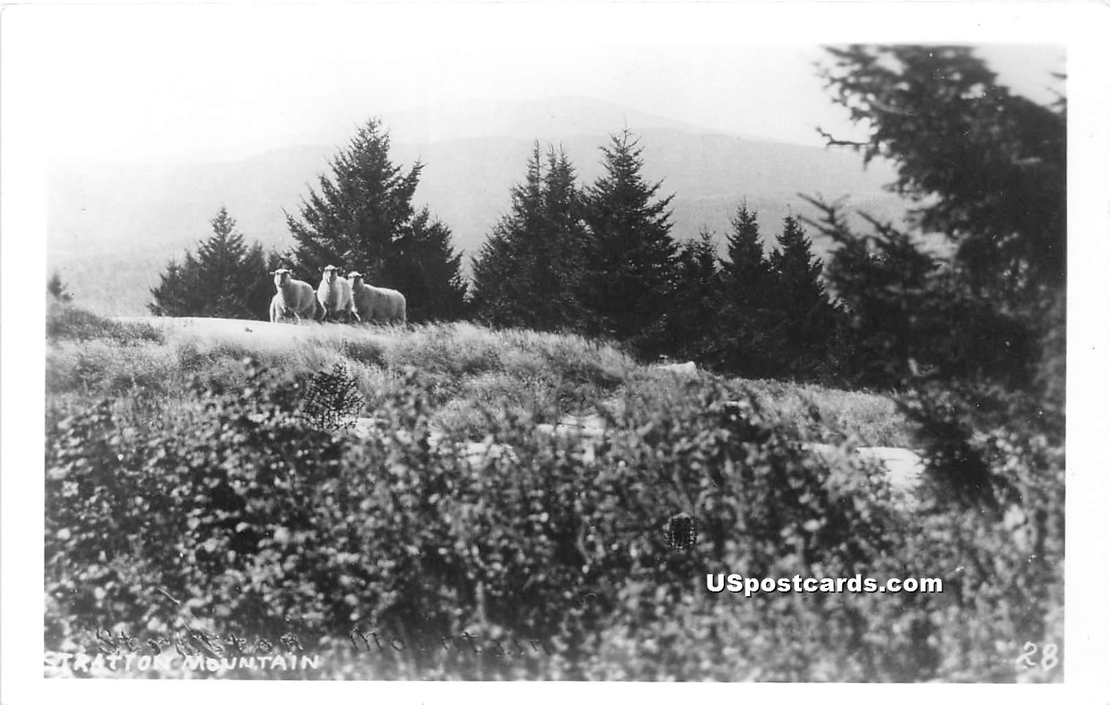 Sheep - Stratton Mountain, Vermont VT Postcard