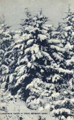 Christmas Trees - Misc, Vermont VT Postcard
