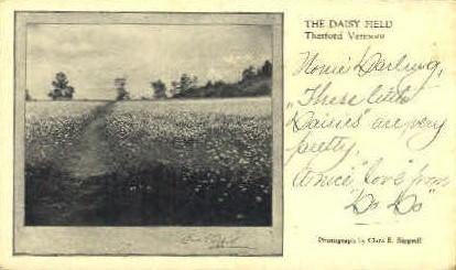 Daisy Field - Thetford, Vermont VT Postcard