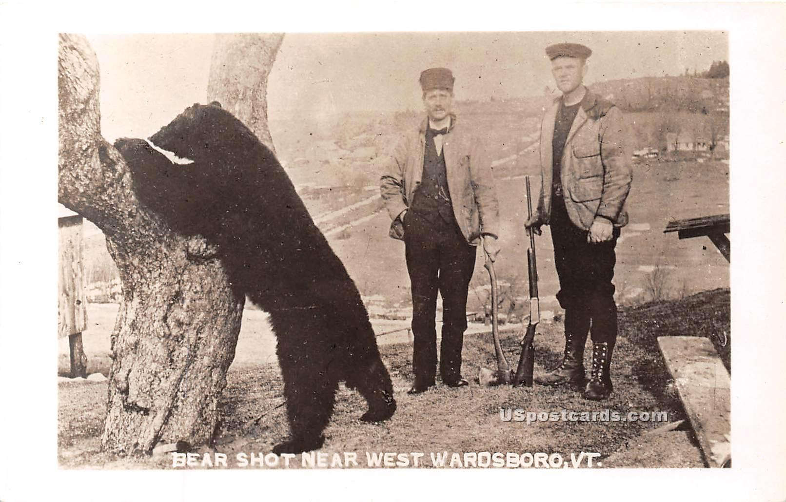 Bear Shot - West Wardsboro, Vermont VT Postcard