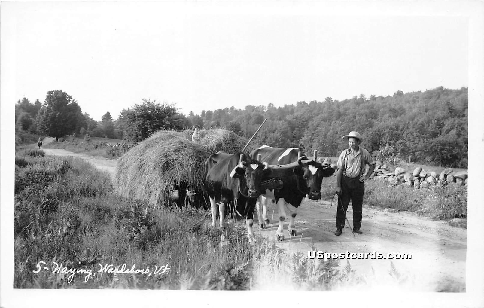 Haying - Wardsboro, Vermont VT Postcard