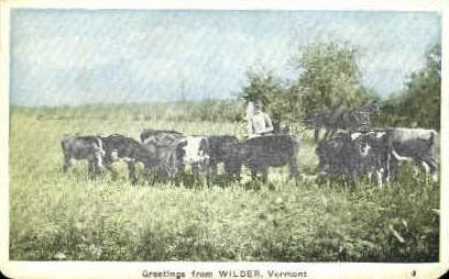 Cows - Wilder, Vermont VT Postcard