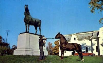 Morgan Horse - Weybridge, Vermont VT Postcard