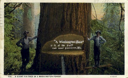Washington Forest - Aberdeen Postcard