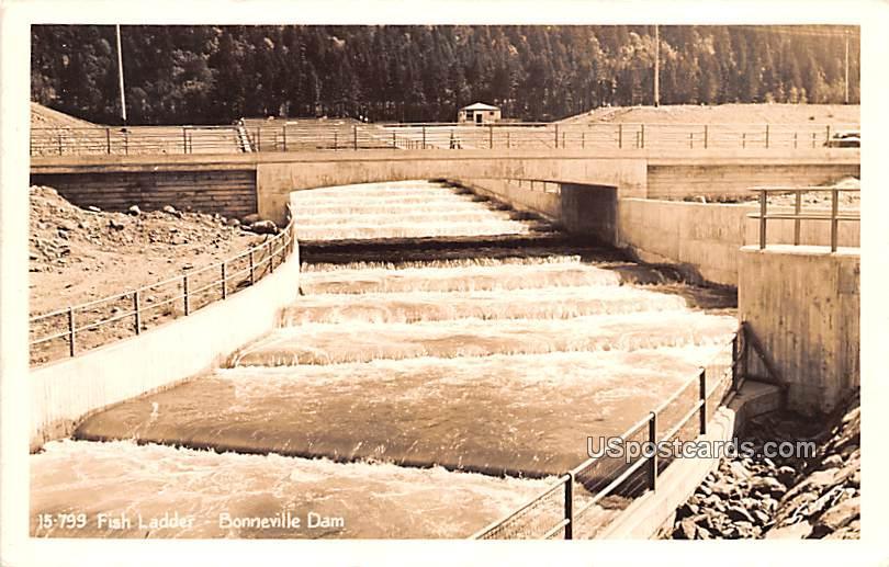 Fish Ladder - Bonneville Dam, Washington WA Postcard