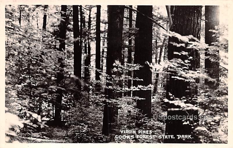 Virgin Pines - Cooks Forest State Park, Washington WA Postcard