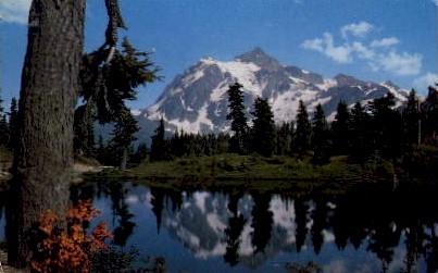 Heather Meadow - Mt Shuksan, Washington WA Postcard