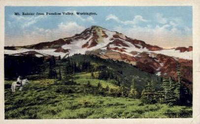 Paradise Valley - Mt. Rainer National Park, Washington WA Postcard