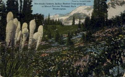 Mount Ranier National Park - Mt. Rainer National Park, Washington WA Postcard
