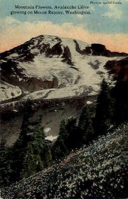 Flowers on Mt. Ranier - Mt. Rainer National Park, Washington WA Postcard