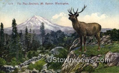 Two Sentinels - Mt Rainier, Washington WA Postcard