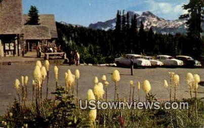 Indian Basket Grass - Mt. Rainier National Park, Washington WA Postcard