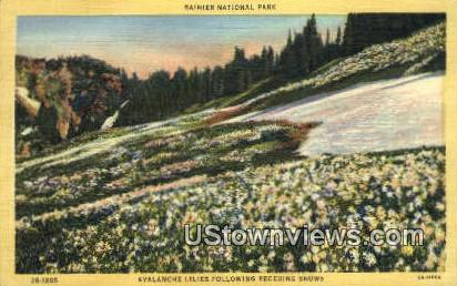 Avalanche Lilies - Rainier National Park, Washington WA Postcard