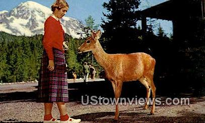 Red Deer - Mt. Rainier National Park, Washington WA Postcard