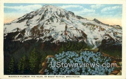The Phlox - Mt Rainier, Washington WA Postcard