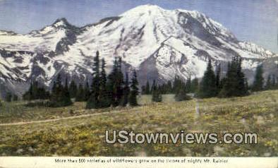Wildflowers - Mt Rainier, Washington WA Postcard