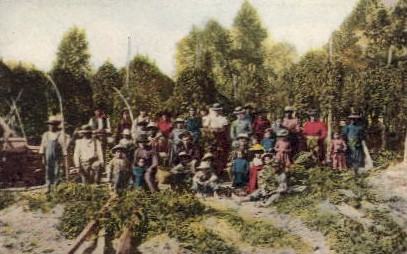 Hop Pickers - Misc, Washington WA Postcard