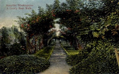 Rose Walk - Misc, Washington WA Postcard