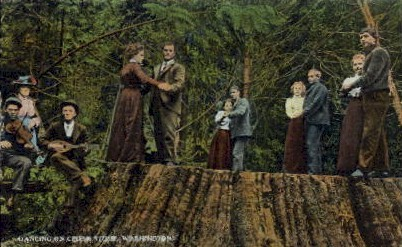 Dancing on Cedar Stump - Misc, Washington WA Postcard