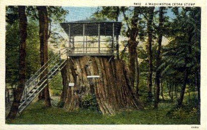 Cedar Stump - Wildwood Auto Camp, Washington WA Postcard