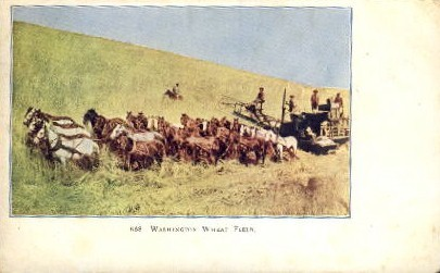 Wheat Field - Misc, Washington WA Postcard