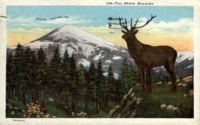 Two Monarchs - Misc, Washington WA Postcard