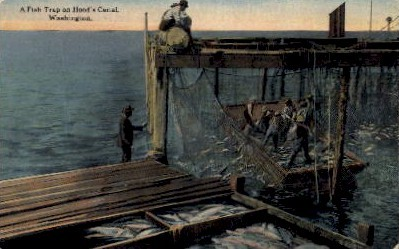 Fish Trap on Hood's Canal - Misc, Washington WA Postcard