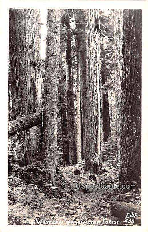 Western Washington Forest - Misc Postcard