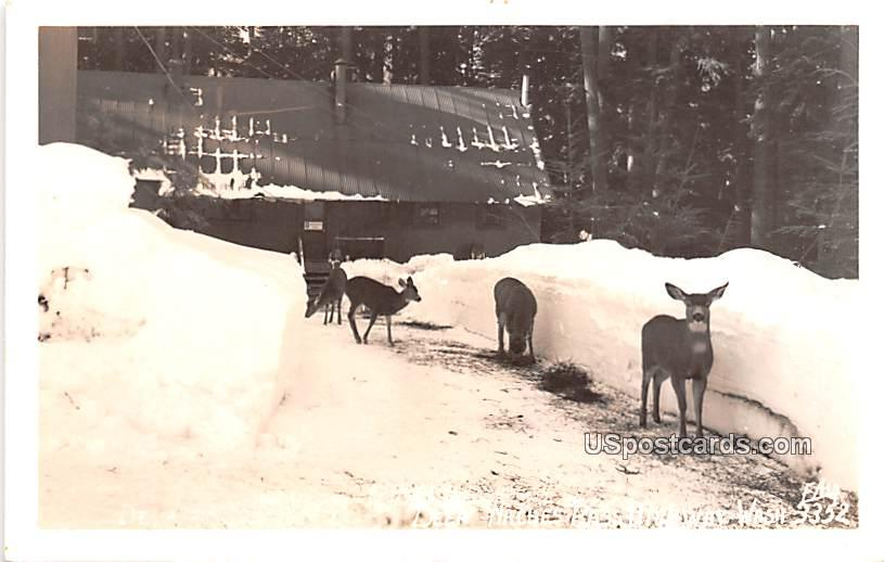 Deer - Naches Pass, Washington WA Postcard