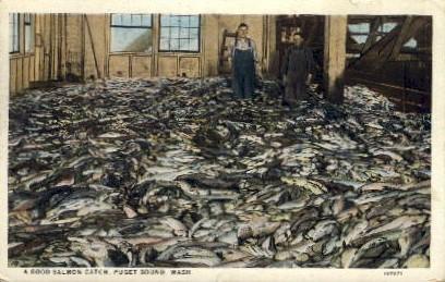 A Good Salmon Catch - Puget Sound, Washington WA Postcard
