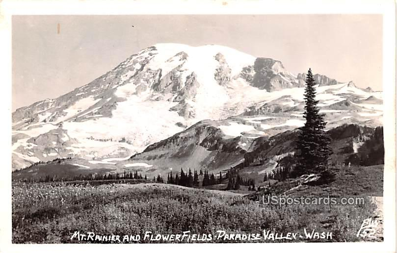 Mount Rainier and Flower Fields - Paradise Valley, Washington WA Postcard