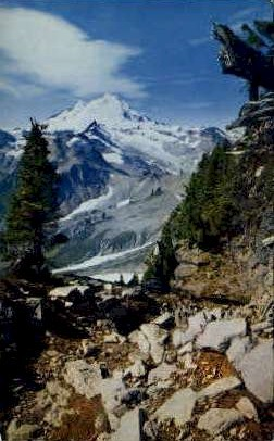 Mount Baker - Misc, Washington WA Postcard
