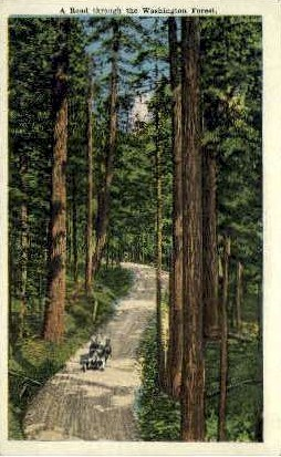 Washington Forest - Misc Postcard