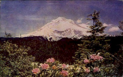 Mt. Hood and Rhododendrons - Misc, Washington WA Postcard