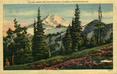 Mt Baker Skyline with Wild Flowers - Misc, Washington WA Postcard