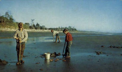 Razor Clam Digging - Misc, Washington WA Postcard