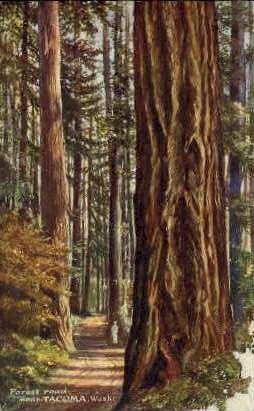 Forest Road - Tacoma, Washington WA Postcard
