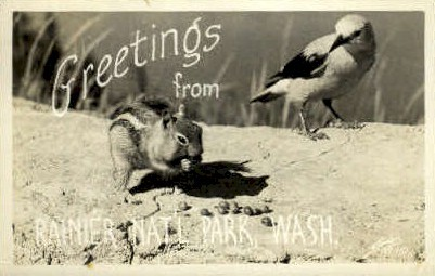 Greetings - Rainier National Park, Washington WA Postcard