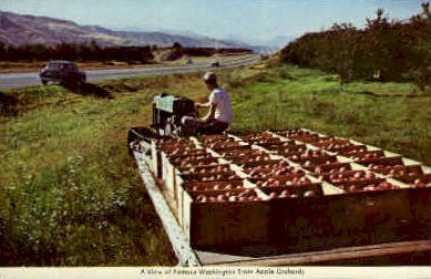 Washington State Apple Orchards - Misc Postcard
