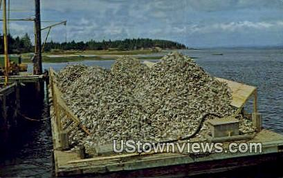 Oyster Shell - Nahcotta, Washington WA Postcard