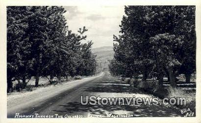 Real Photo - Highway, Orchards - Eastern Washington Postcards, Washington WA Postcard