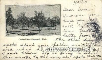 Orchard - Kennewick, Washington WA Postcard