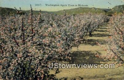 Washington Appel Trees - Misc Postcard