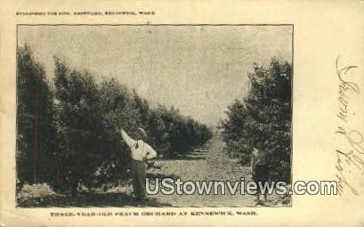 Three Year Old Peach Orchard - Kennewick, Washington WA Postcard