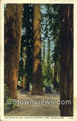 Big Douglas Firs - Rainier National Park, Washington WA Postcard