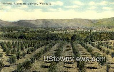 Orchard - Misc, Washington WA Postcard