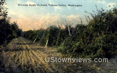 Winesap Apple Orchard - Yakima Valley, Washington WA Postcard